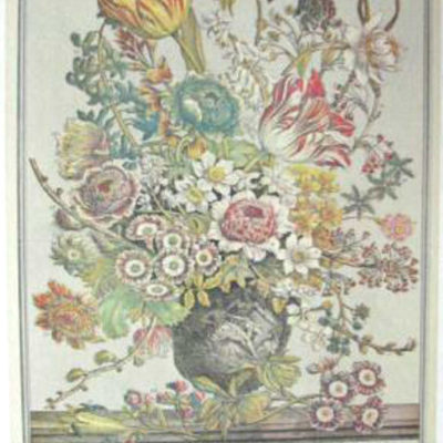 12-months-of-flowers-march-by-furber-botanicals