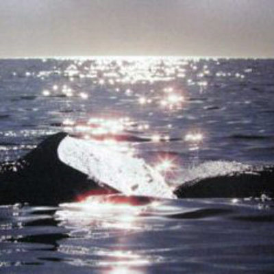 aquatic-light-by-talbot-whales