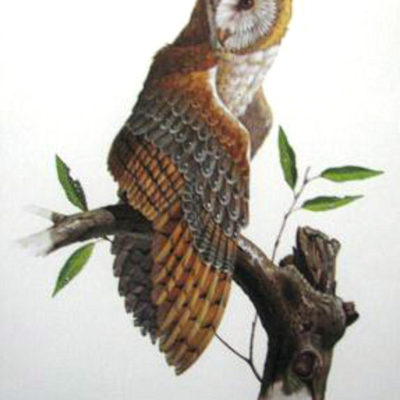 barn-owl-by-don-balke-signed-and-numbered-print