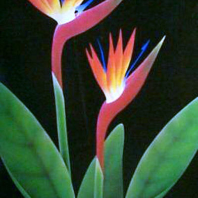 bird-of-paradise-by-pema-floral-art