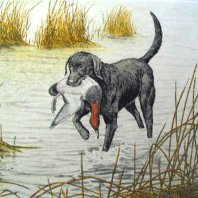 black-lab-by-dave-chapple-limited-ed-etching