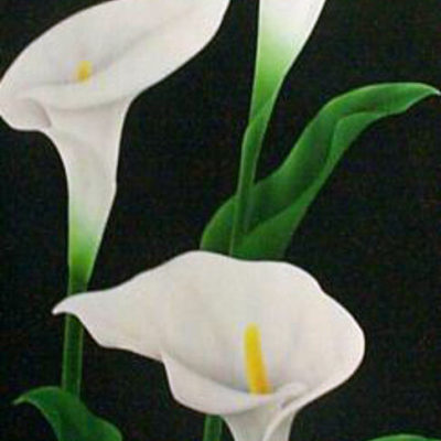 calla-lily-by-pema-floral