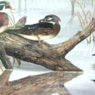 Ducks On A Log by Lee Rogers
