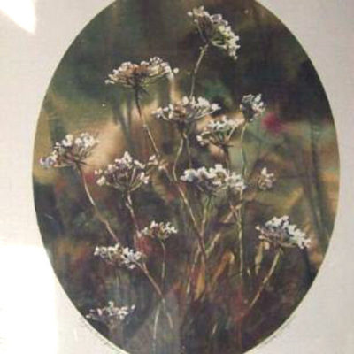 english-cow-parsley-by-sandra-giangiulio-floral