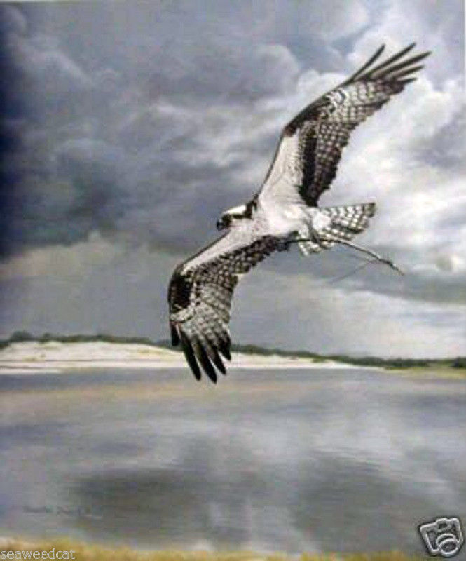 Frace Safe Return Osprey Emery S Fine Art Gallery Listen to mc frace | soundcloud is an audio platform that lets you listen to what you love and share the sounds you create. frace safe return osprey
